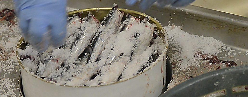 Strato di acciughe sotto sale