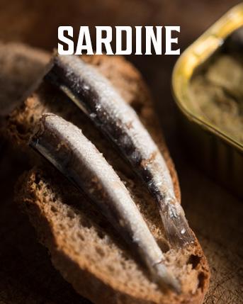 Negozio Sardine