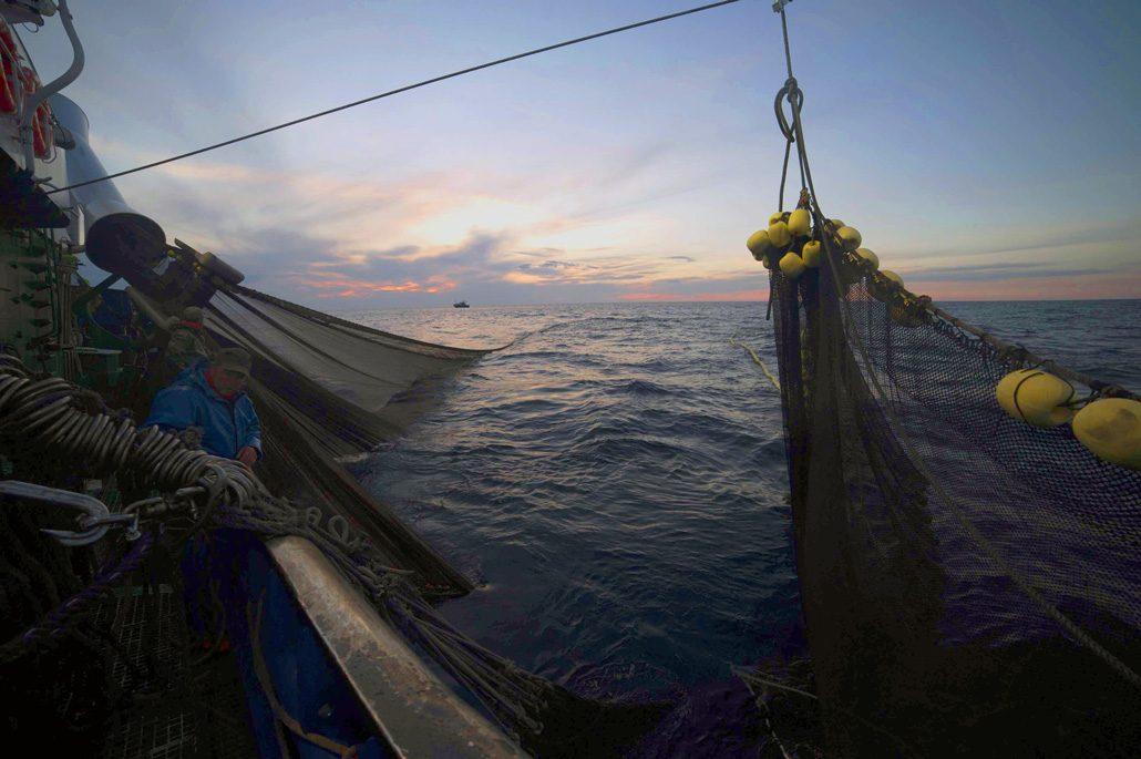 Pesca Acciughe Cantabrico